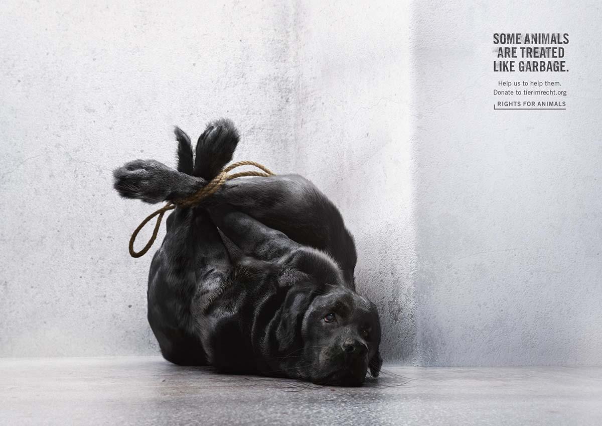 tir-animals-like-garbage-01_aotw_0