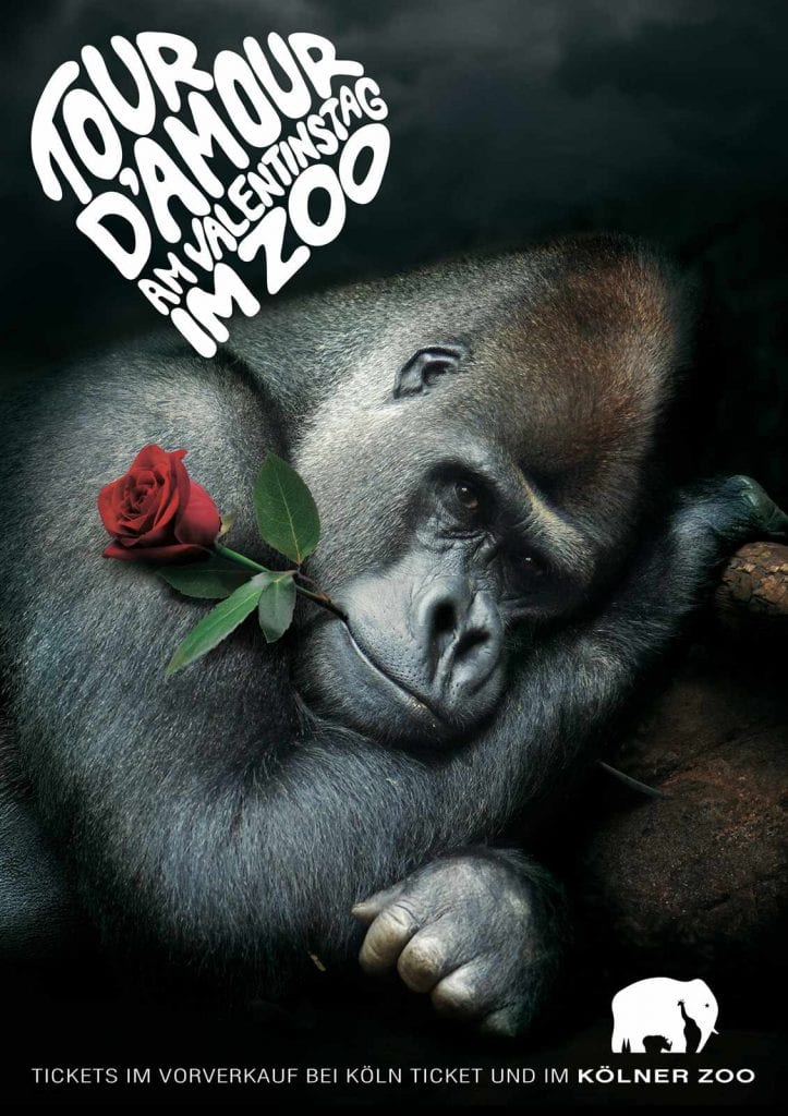 a4_poster_print_gorilla